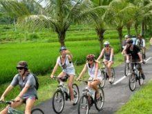 Wisata Kelompok Menikmati Bersepeda di Persawahan